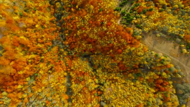 vídeos de stock, filmes e b-roll de vôo do zangão sobre a floresta da queda. folhas e árvores do outono. cena bonita alaranjada, vermelha, amarela e verde. - setembro amarelo