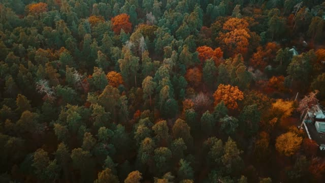 vídeos de stock, filmes e b-roll de vôo do zangão sobre a floresta da queda. laranjeiras, vermelhos, amarelos e verdes coloridos árvores de outono - setembro amarelo