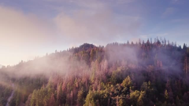 drone flight through light cloud over forest - parco nazionale video stock e b–roll