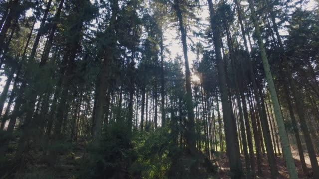 Drohnenflug durch Odenwald gegen die Sonne – Video