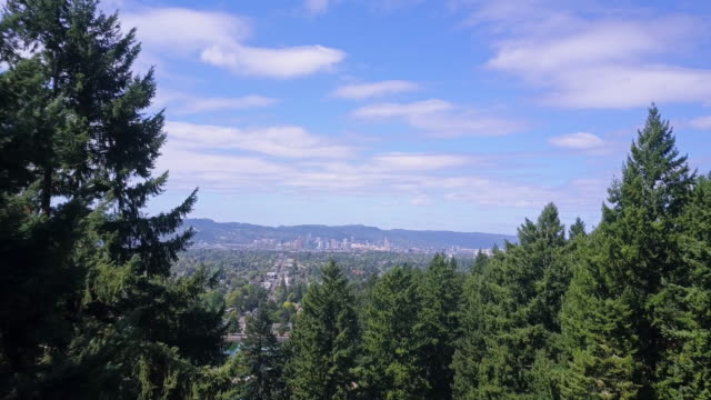 Drone Flight Through Trees Towards Portland, Oregon Drone flight through trees on Mount Tabor, with the skyline of downtown Portland in the distance. natural parkland stock videos & royalty-free footage