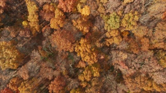 vídeos de stock, filmes e b-roll de drone sobrevoar mount hope historical park, nj - nordeste