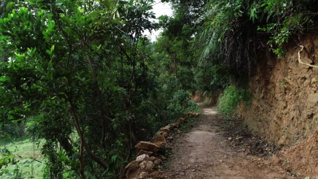 drone flying backward over hiking trail in tropical forest pov point of view .4k - percorso per bicicletta video stock e b–roll