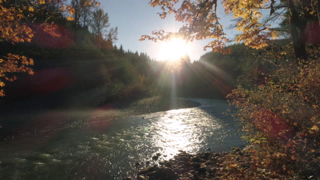 drone flying by fall leaves in forest with golden sun flare on river water - 4k stock videos & royalty-free footage