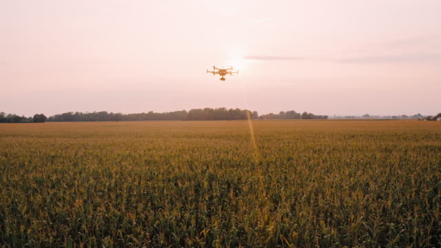 AERIAL Drone flying over a field at sunset