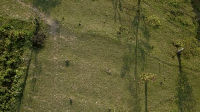 drone flying over a field on ranch with vineyard - równina filmów i materiałów b-roll