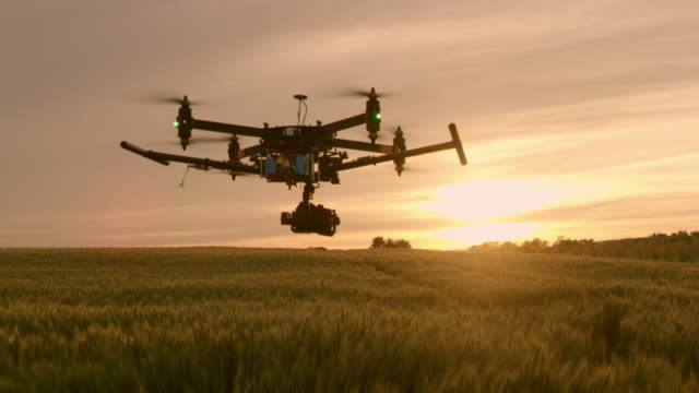 ws drone flying over field of wheat at sunset - quadcopter filmów i materiałów b-roll