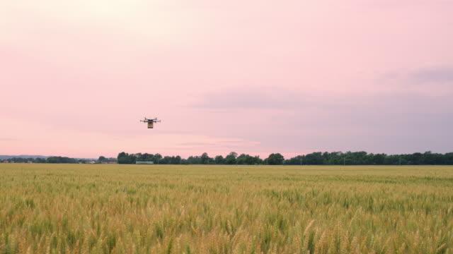 ds drone flyger över fälten med ett paket - drönare transportmedel bildbanksvideor och videomaterial från bakom kulisserna