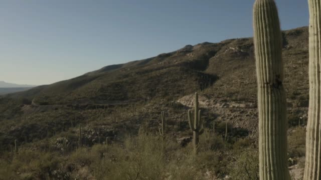 Drone flying through a forest of saguaro cacti in mountainous terrain on Mt Lemmon