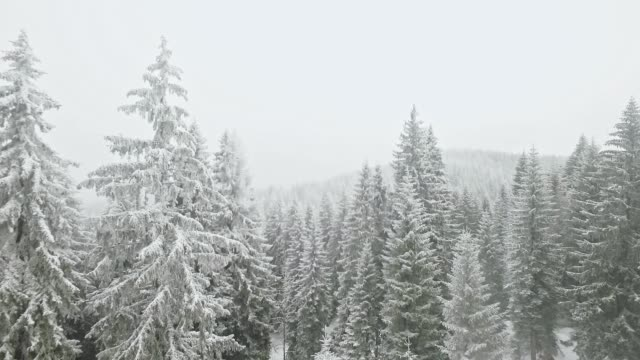 Drone flying through snow covered forest video