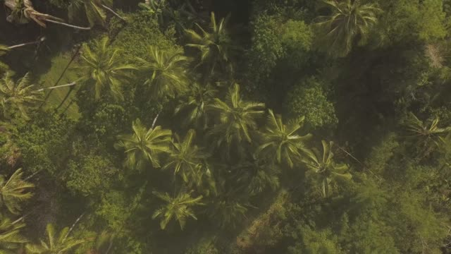 vídeos de stock e filmes b-roll de drone flyover rural place palm trees plantation,plants and house rooftop. - oleo palma