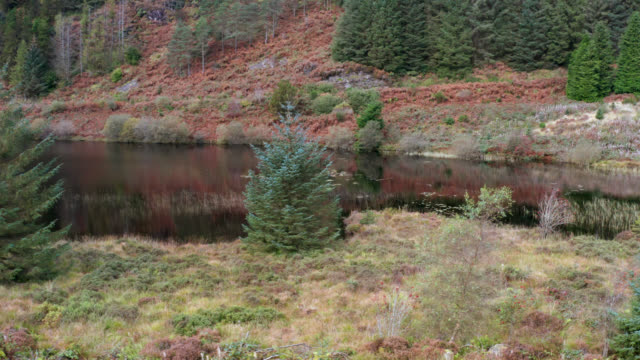Drone footage of a small loch in a forest in rural Scotland video