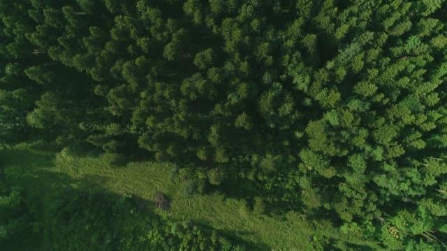 drone bilder av lungor av planeten det vill säga grön majestätisk skog på spel av avskogning. - klimat bildbanksvideor och videomaterial från bakom kulisserna