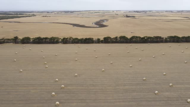 Drone footage of rolled hay bales in a dry agricultural field on a farm video