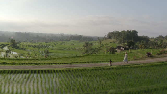 drone hovering above rice terraces in bali and woman walking on pathway - południowy wschód filmów i materiałów b-roll