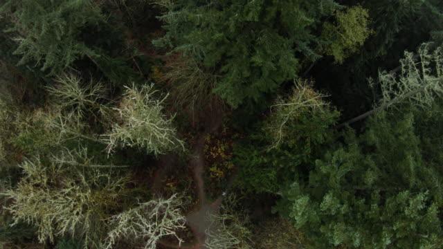 マウンテンバイクシングルトラックに乗って男を見下ろす森の上のドローン ビデオ