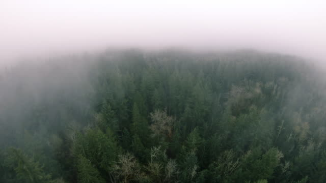 Drone Over Green Forest Trees Looking Up to Hazy Fog Cloud