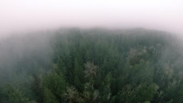 yeşil orman ağaçları üzerinde drone puslu sis bulutu arıyorsunuz - bakir yer stok videoları ve detay görüntü çekimi