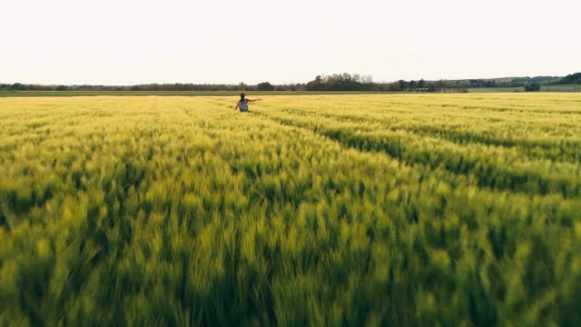 Drone point of view carefree,exuberant young female farmer running in idyllic,rural green wheat field,slow motion