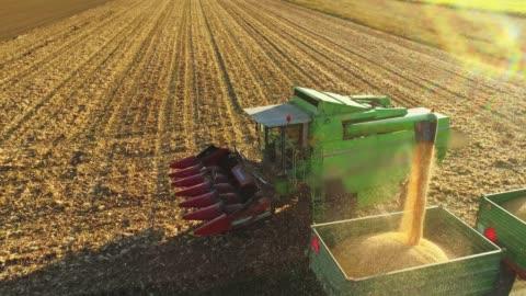il punto di vista del drone combina il rimorchio di riempimento dello scivolo della mietitrice con il mais raccolto in campo soleggiato e rurale, al rallentatore - agricoltura video stock e b–roll