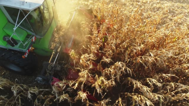 vídeos de stock e filmes b-roll de drone point of view combine harvester harvesting corn crop in sunny,rural field,slow motion - colheita