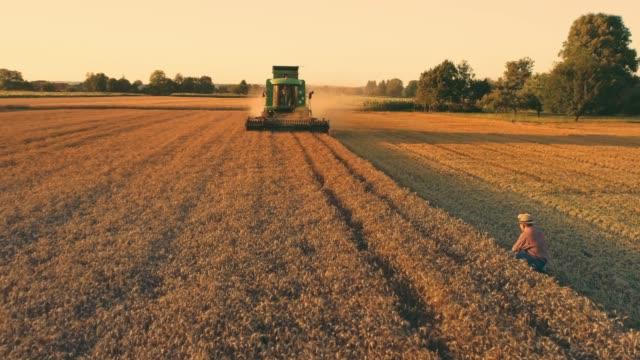 vidéos et rushes de agriculteur de point de vue de drone je regarde moissonneuse récolte ensoleillée, récolte de blé rural idyllique, ralenti - blé