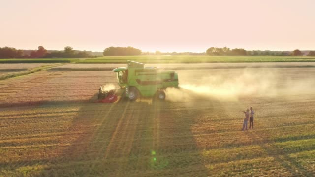 drone point of view farmers watching combine harvester harvesting sunny,rural wheat crop,slow motion - trattore video stock e b–roll