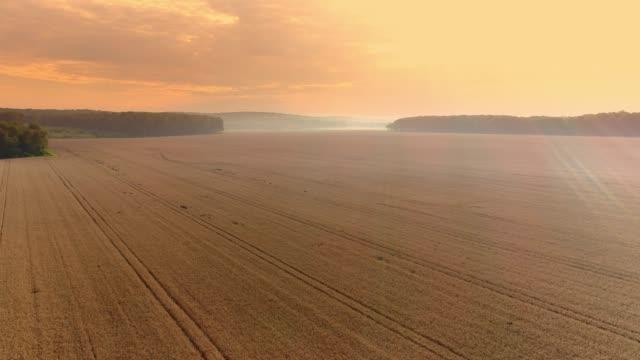 stockvideo's en b-roll-footage met drone oogpunt uitgestrekte, idyllische gouden tarwe gewas. - wheat field