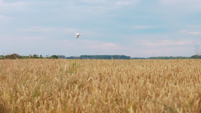 日の出、村、田舎のフィールドで飛ぶドローンクワッドコプター。ledランプは、航空機本体、リモコンで動作します。その後、それは空に飛び去る - コントロール点の映像素材/bロール