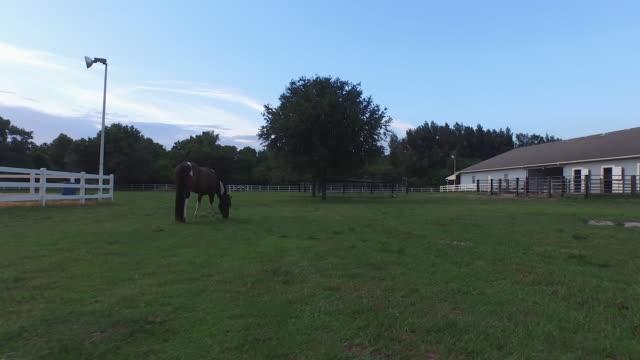 drone kręci się wokół koń w polu w 4 k - siodło filmów i materiałów b-roll