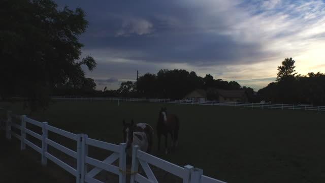 drone wznosi się na ogrodzenie w dwa konie oglądać w 4 k - siodło filmów i materiałów b-roll