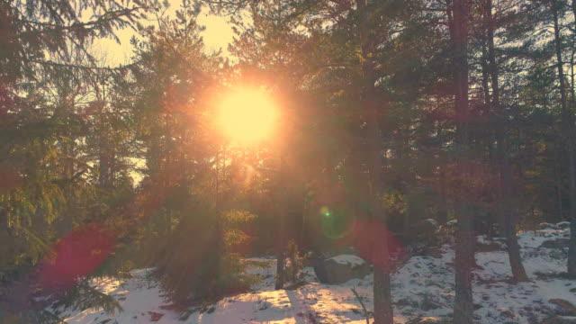 drone-skott som flyger upp i fir tree skog. flygfoto över vintern landskap woods - pine forest sweden bildbanksvideor och videomaterial från bakom kulisserna