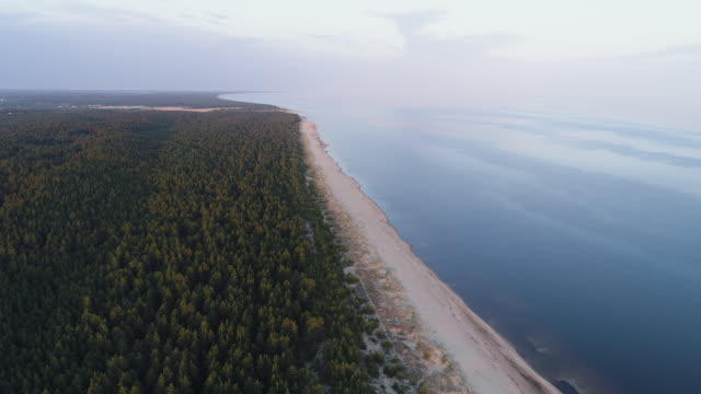 drone shot of a coastal forest - латвия стоковые видео и кадры b-roll