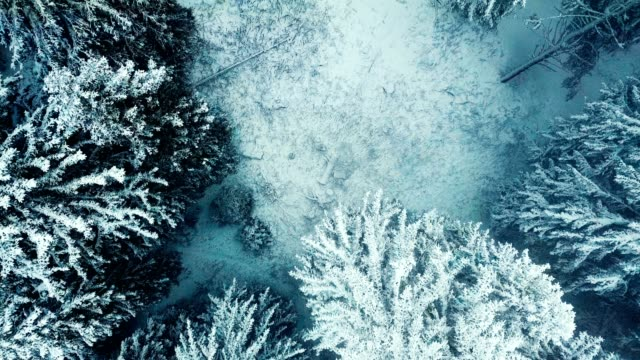drone shot of a forest in winter snow storm.view from above. video may contain noise because of foggy like condition. - wood texture filmów i materiałów b-roll