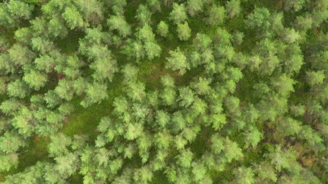 drone shot av en skog - pine forest sweden bildbanksvideor och videomaterial från bakom kulisserna