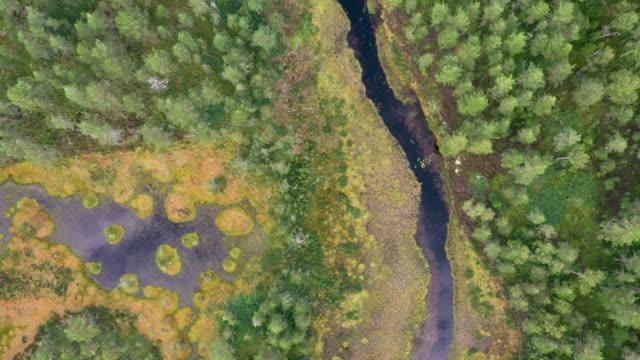 drone shot av en skog med en flod och sjö i den - summer sweden bildbanksvideor och videomaterial från bakom kulisserna