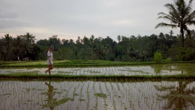 drone shot of a young woman walking near rice field in asia. woman travelling in bali, rice terrace - taras rolny filmów i materiałów b-roll