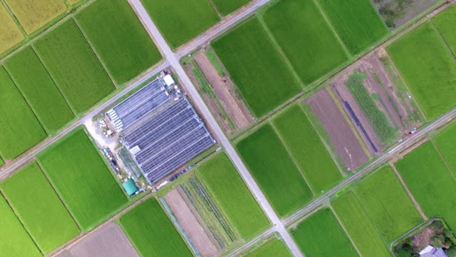 Drone shot of rice field in summer video