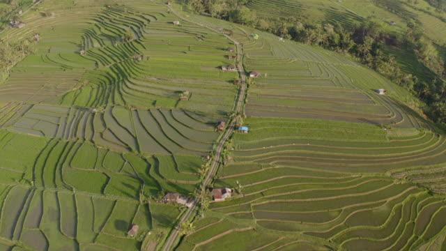 在美麗的陽光日,印尼水稻梯田的無人機拍攝。 - 東南 個影片檔及 b 捲影像