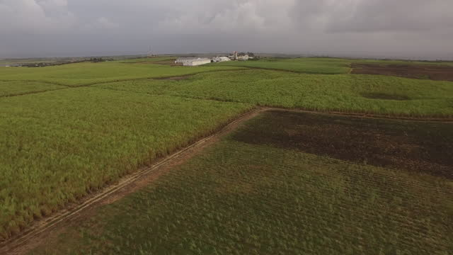 Drone shot panning up from sugar cane field to factory in the distance (1) video