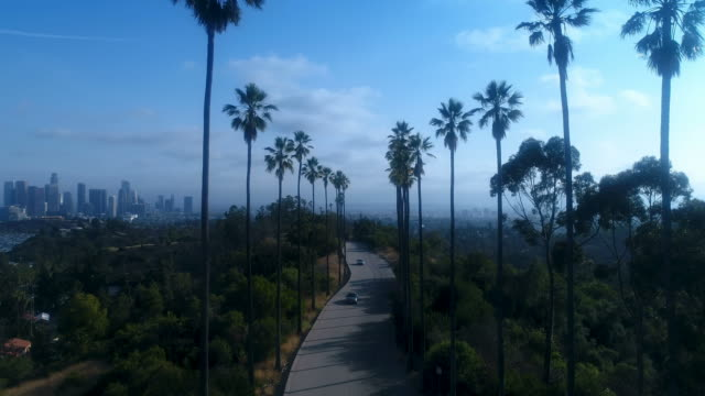 Drone shot through palm trees above Los Angeles - 4k UHD video