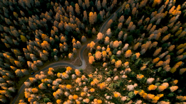 Drone Vertical Perspective of autumn forest, italian alps video