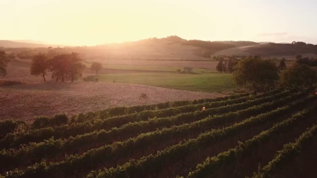 Drone video - flying over an italian vineyard Drone video - flying over an italian vineyard - Tuscany Italy olives stock videos & royalty-free footage