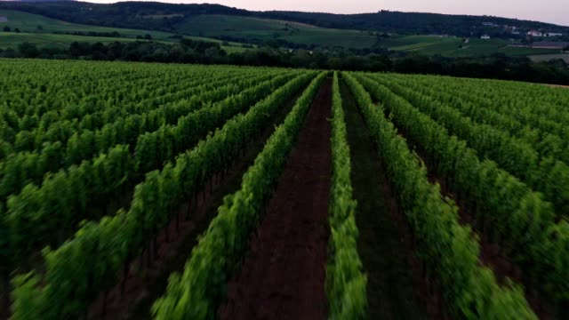 drone video from german vineyards - uva riesling bianco video stock e b–roll