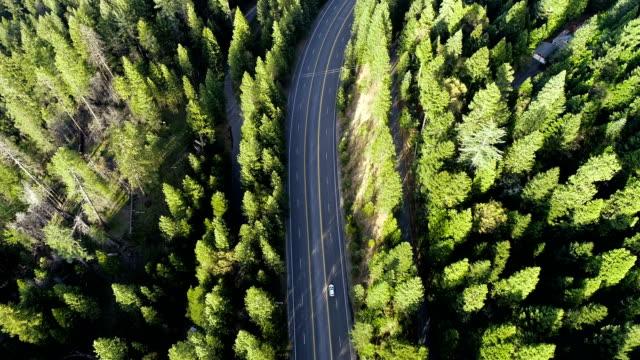 vídeos de stock, filmes e b-roll de vista de drone seguindo estrada na floresta do norte califórnia serra nevada espessa floresta zangão aéreo vista - estrada principal estrada