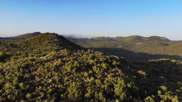 vídeos de stock e filmes b-roll de drone view in forest - reserva natural