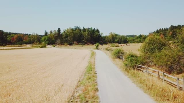 drönarvy av landsbygden, kor, road - summer sweden bildbanksvideor och videomaterial från bakom kulisserna