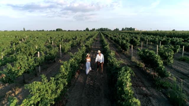 drone view of wine farm, happy girl with boyfriend walking in a vineyard between rows - para aranżacja filmów i materiałów b-roll