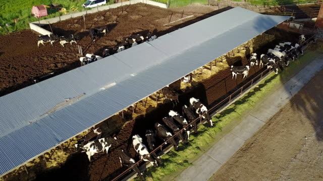 vidéos et rushes de vue de drone sur la ferme laitière dans l'utah, usa - vache laitière
