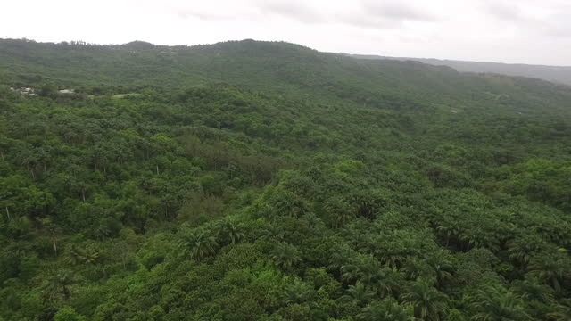 Drone view over lush tropical forest video